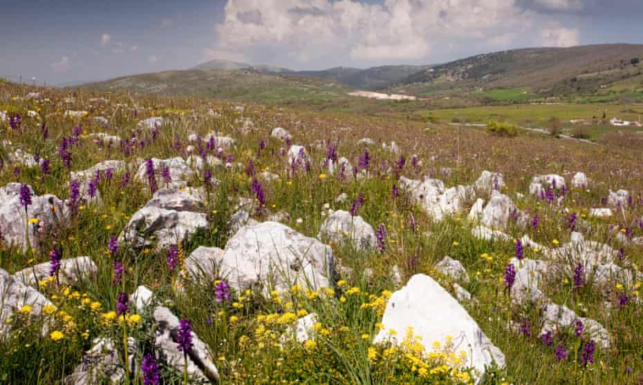 A limestone pasture with orchids on the Gargano Peninsula, Italy.