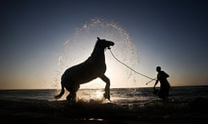 Unbridled power: horses continue to haunt the minds of a humanity that has turned away from them