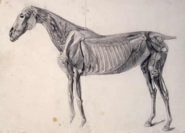 Finished study for Anatomy of the Horse: 4th Anatomical Table by George Stubbs (1756-58).