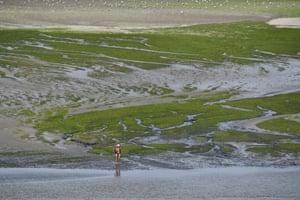 A woman on Grandville beach, which is covered with toxic green algae, in Hillion, near Saint-Brieuc.