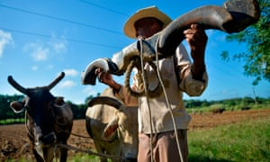 A farmer works in a field using oxen to plough the land in Los Palacios, Pinar del Rio province.