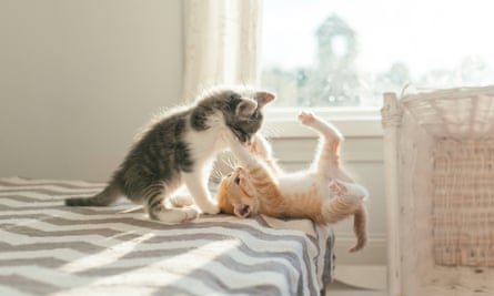 Why Are Kittens So Cute You Asked Google Here S The Answer Cats The Guardian