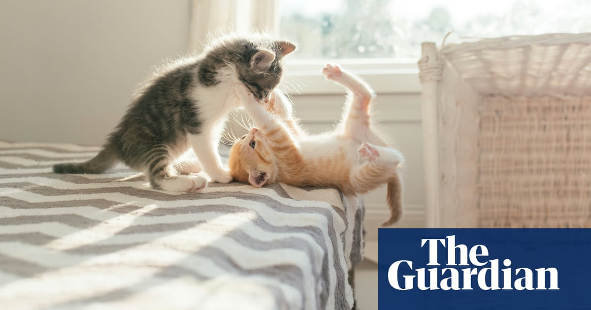 In 18 months, we've had 30 cats – and it's been wonderful | Tom Hawking