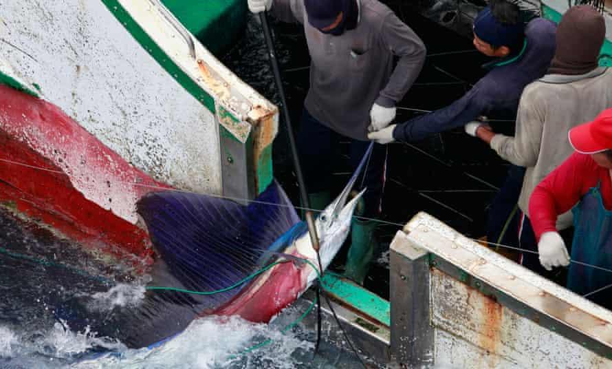 sailfish Taiwanese fishing vessel Pacific island Palau