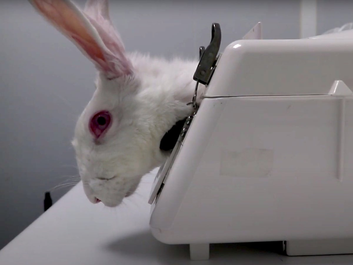 Undercover footage shows 'gratuitous cruelty' at Spanish animal testing facility | Animal experimentation | The Guardian