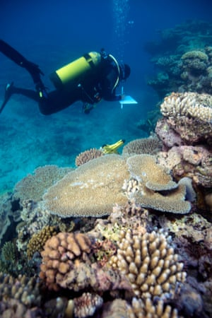 Joleah Lamb on the Great Barrier Reef.