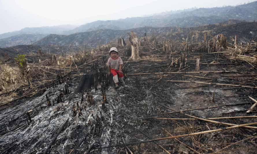 A girl sits where teak trees once grew in the Bago region of Burma. The world's appetite for hardwoods is helping to drive deforestation in one of the last major areas of tropical forest in Asia.
