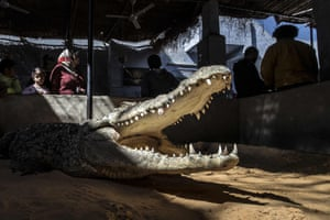 Visitors watch a crocodile at Mamdouh Hassan's house