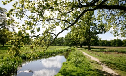 Bushy Park, one of London's royal open spaces that have become important wildlife havens.