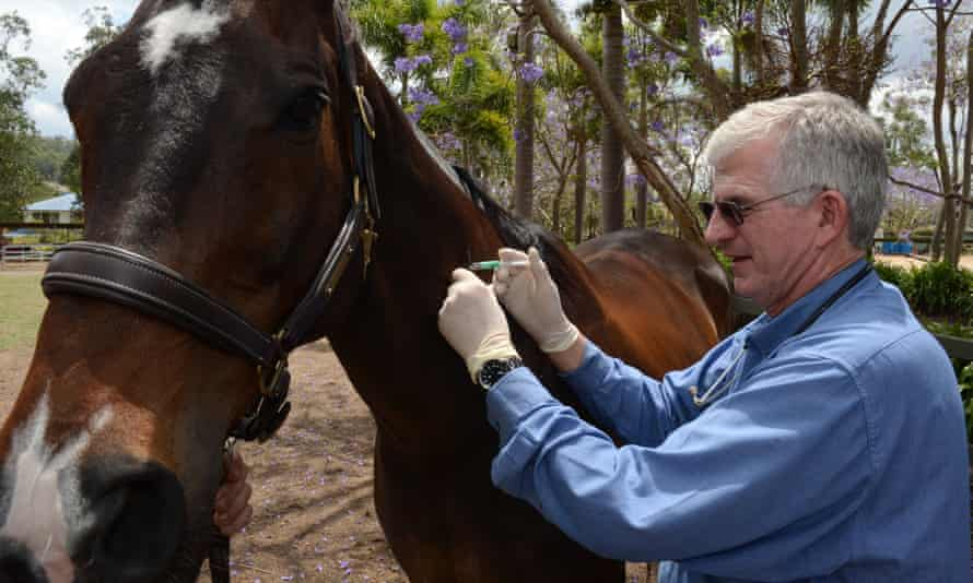 A horse on a property in Queensland is given the Hendra virus vaccination. The deadly disease is also a threat to humans.