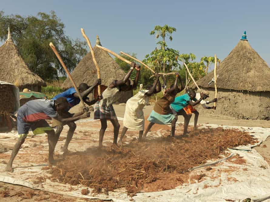 The people of Paur village beat sorghum