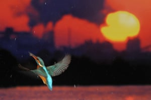 Jose Luis Rodriguez was awarded the Ciwem Changing Climates prize for this outstanding photograph 'Flight for Life', showing a kingfisher caught mid-flight, with severe pollution in the background.
