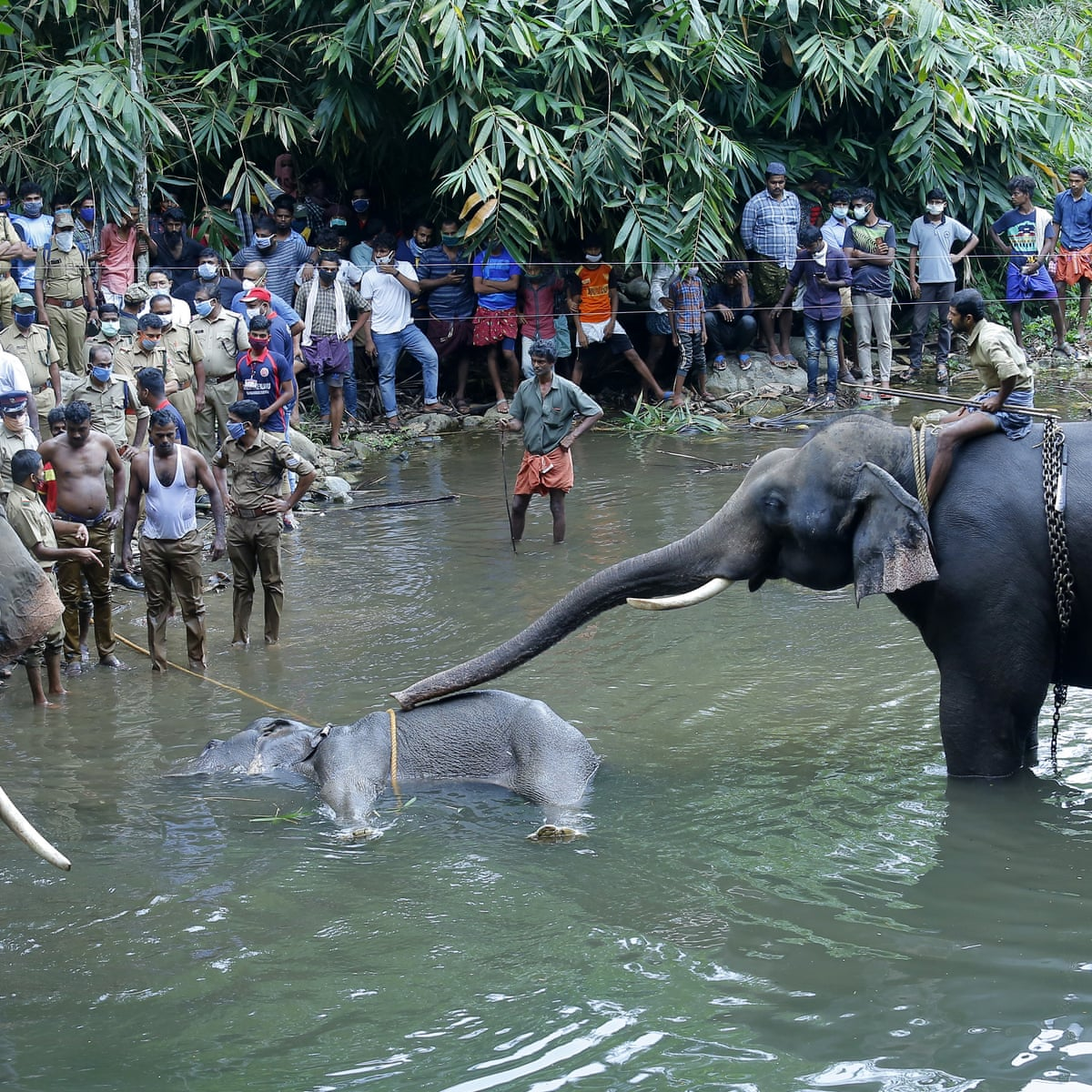 Killing of elephant with explosive-laden fruit causes outrage in ...