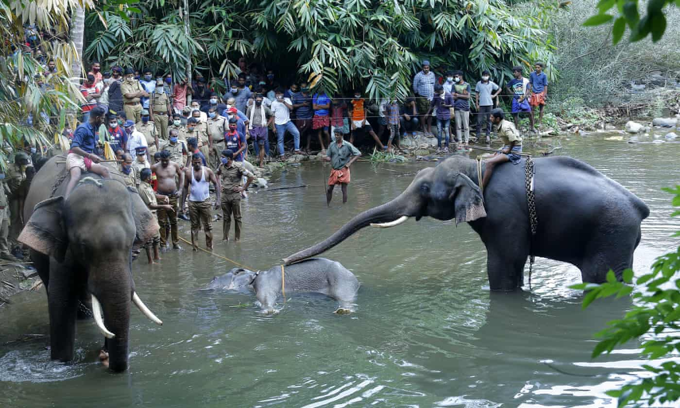 Killing of elephant with explosive-laden fruit causes outrage in India