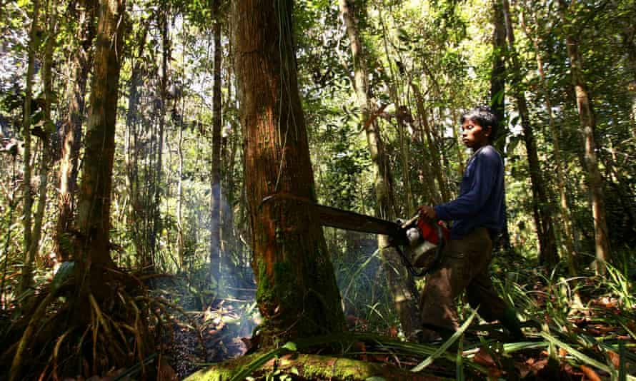 Indonesia is one of the world's biggest greenhouse gas emitters, primarily due to deforestation, peatland degradation and forest fires.