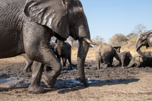 A herd of elephants visits the water hole.