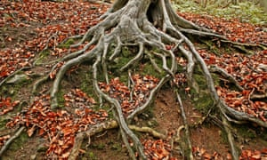 Some roots (from the Wrekin, Shropshire).