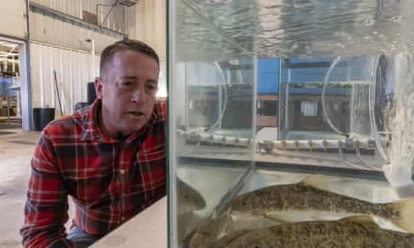 Alex Gonyaw, senior fish biologist for the Klamath Tribes, examines juvenile suckerfish at the tribe's fish and wildlife facility in Chiloquin, Oregon.