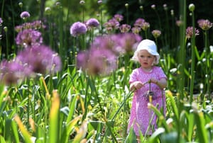 A girl plays among allium flowers at Kew Gardens in London