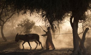 A boy drives a donkey to pull water up from a well in the Sahel desert