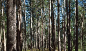Deep breath: open your lungs with the wonderful scent of eucalyptus.
