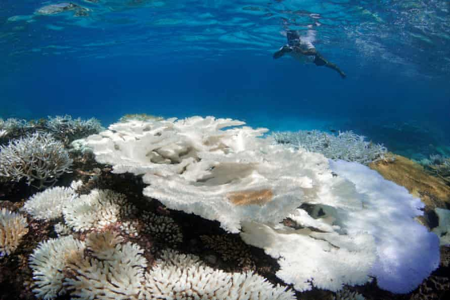 Coral bleaching in the Maldives