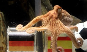 Paul the octopus.