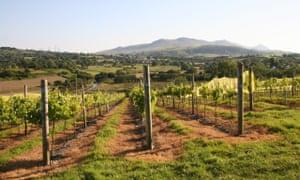Pant Du vineyard, near Caernarfon
