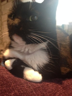 """'Pawsy demonstrating total """"underwhelment"""" with herself.'"""