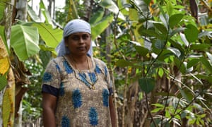 Sheeja CG, a 46-year-old farmer, last month increased her income dramatically by mortgaging 53 of her trees at the local bank, in return for 2,650 rupees (£26.96).