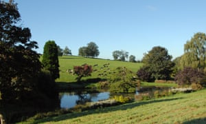 field and lake