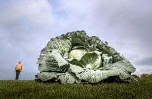 Harrogate, England: Ian Neale with his 30.2kg giant cabbage at the Harrogate autumn flower show