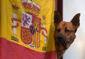 A dog is seen next to a Spanish flag.