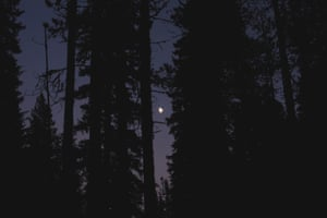 The Moon Rising At Dusk Through Dark ForestStocksy txpfda9ca443s7200 Large 817016
