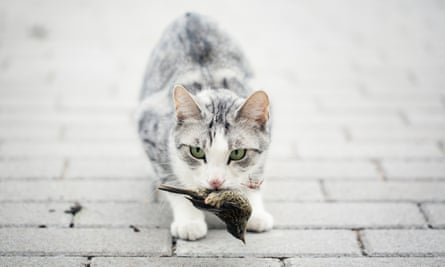 A cat with a bird in her mouth