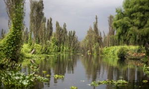 A canal in Xochimilco Lake, Mexico City.