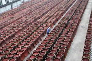 Chengdu, China. An employee at work in a watercress airing and drying plant