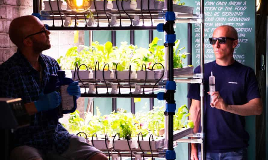 James Koch (left) and James Smailes at their vegan cafe, Suncraft, where they grow salad leaves hydroponically.