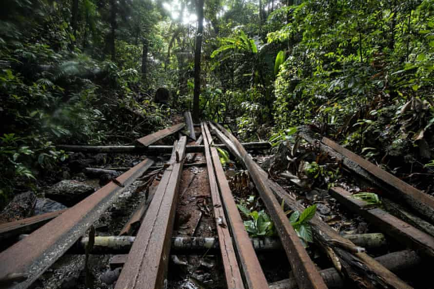 Timber planks at an illegal logging site in the Philippines.