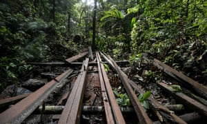 Timber planks at an illegal logging site discovered by the Palawan NGO Network Inc (PNNI) near the tourist town of El Nido