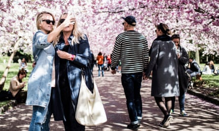 People taking pictures under blooming cherry blossoms at the cemetery of Bispebjerg in Copenhagen, Denmark.