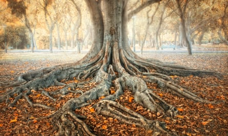 An ancient tree's roots