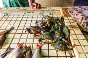 Punta Gorda fish market