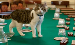 Larry the cat attends a cabinet meeting
