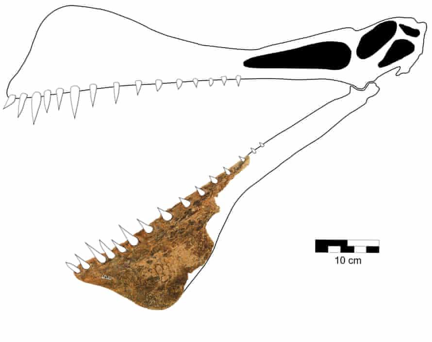 The jawbone of the pterosaurus