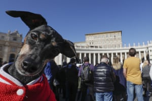 A dog is cuddled by its owner in St Peter's Square at the Vatican.