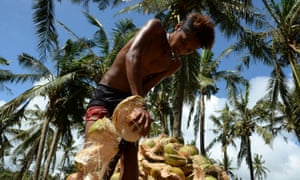 Exploited? A Filipino coconut farmer.