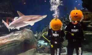 Divers hold their pumpkins after carving them in a fish tank during a photo call to mark Halloween season at the London Aquarium in central London
