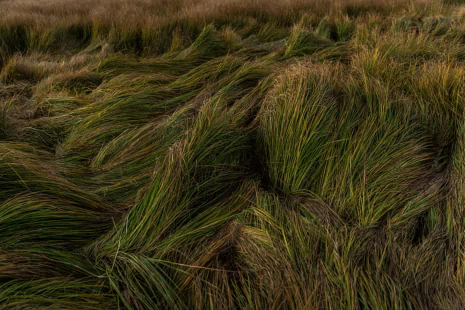 Long grass at the Little Llangothlin nature reserve, a protected wetland nature reserve in the northern tablelands