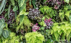 Picture perfect: plants like those in this living wall can look amazing on Instagram, but there are pitfalls.